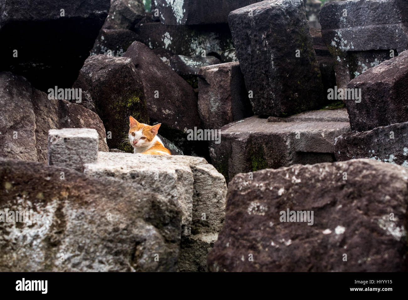 wander cat found in an abandoned site Stock Photo