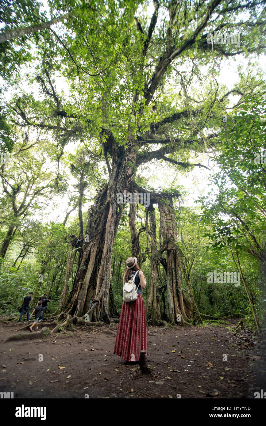 national park, Kebun Raya Bali in Ubud - Stock Image