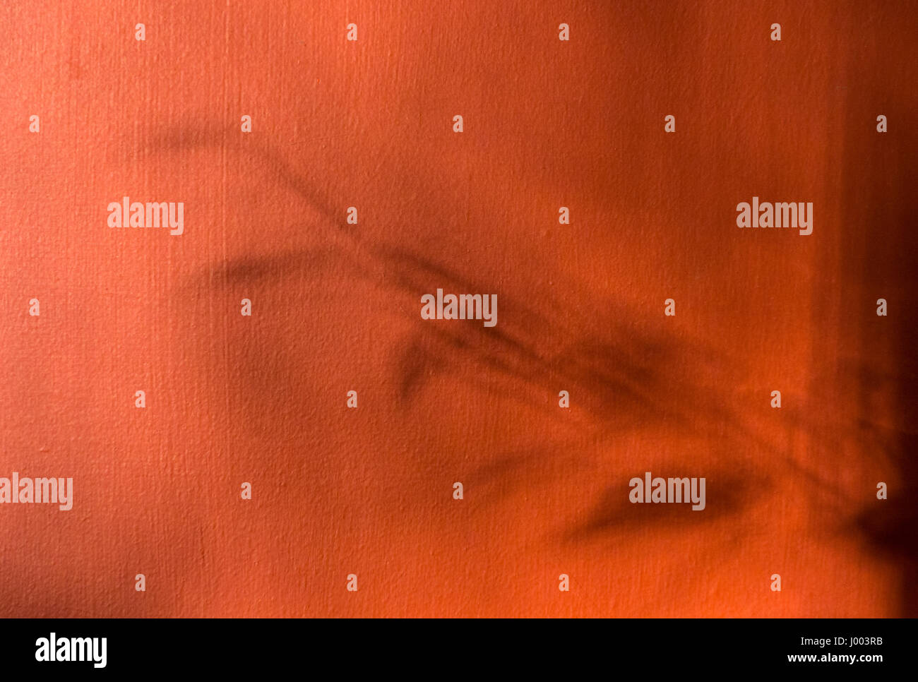 Abstract photo of a plants leaves and stem as shadows on an ochre wall - Stock Image