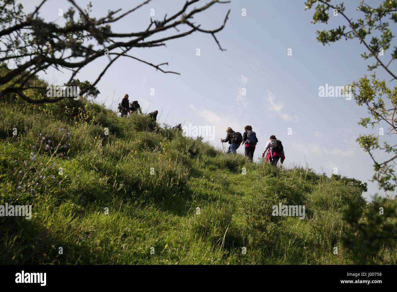Senior citizen hikers on a strenuous climb of a steep hill during hiking in the shrubland. The Menashe Heights in - Stock Image