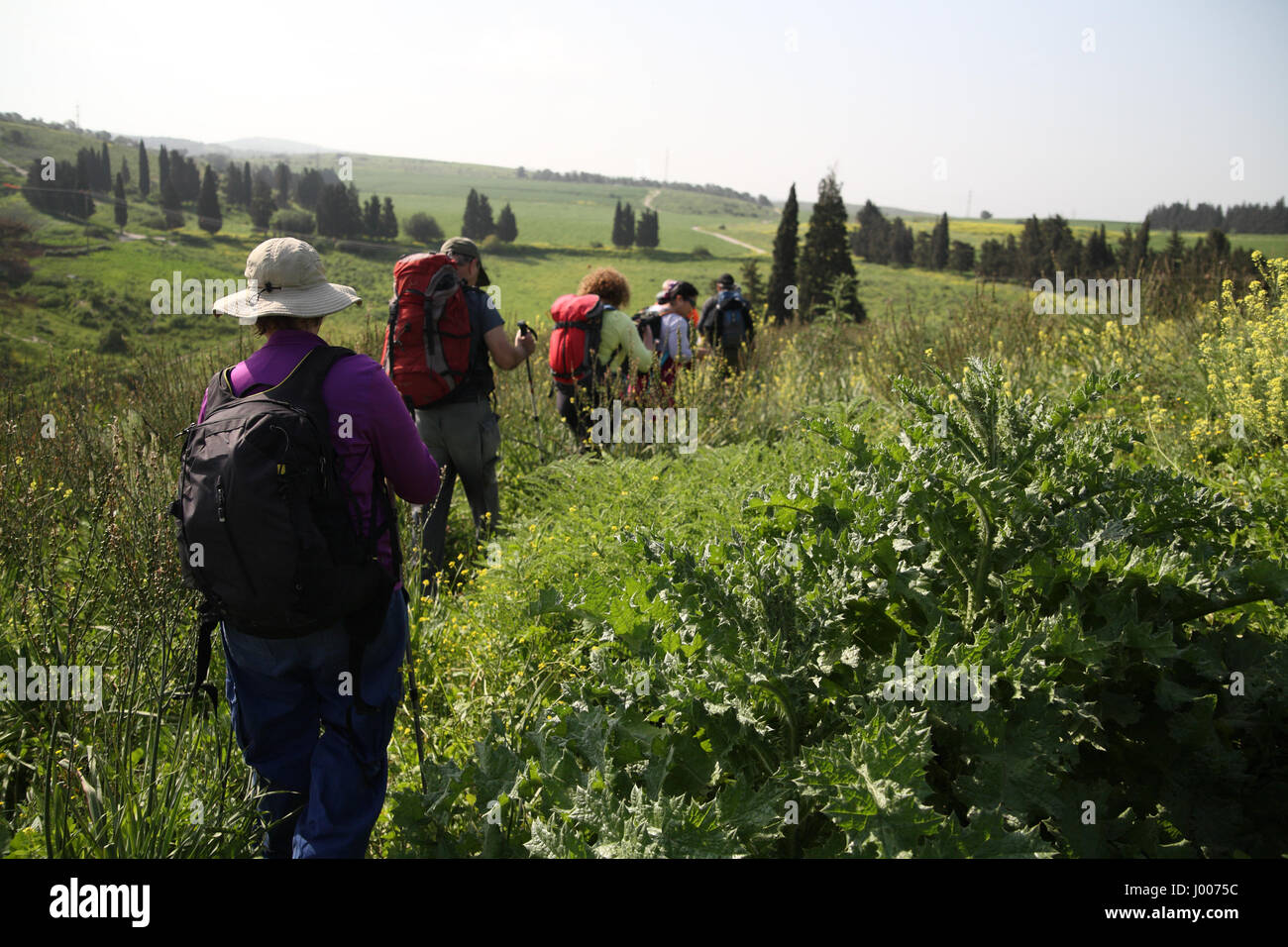 A group of senior citizen hikers walk in the green countryside. By Ein Hashofet in the Menashe Heights, the southern - Stock Image