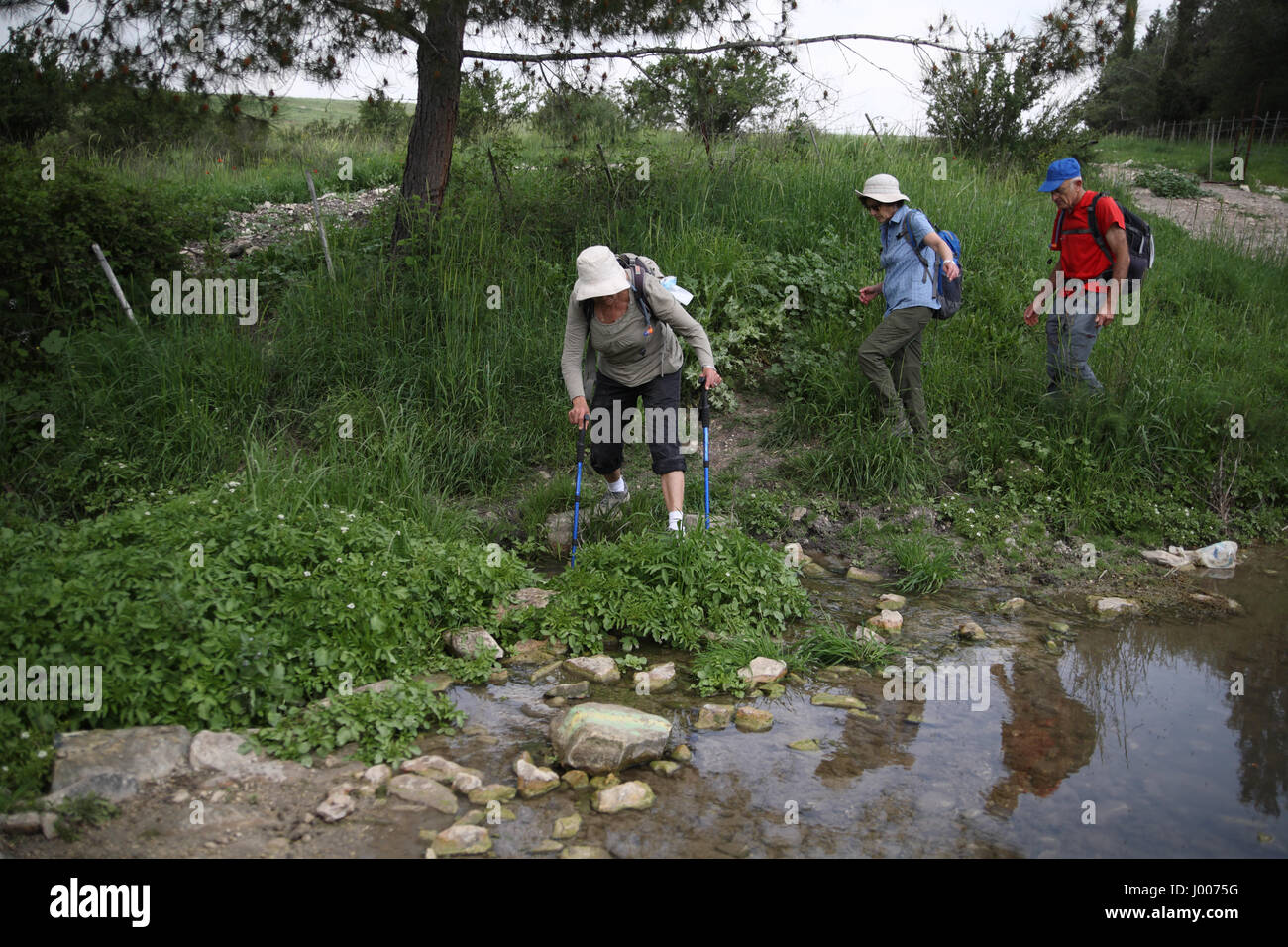 A 69 year old woman hiker walk on pebbles to cross a stream using her hiking sticks for support, her two friends, - Stock Image