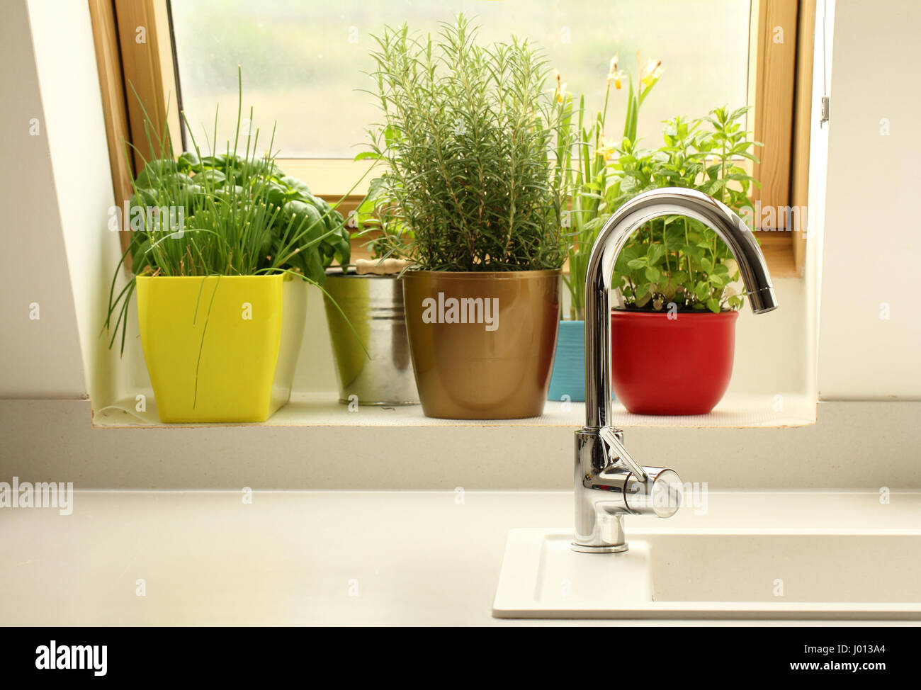 herbs growing in kitchen - Stock Image