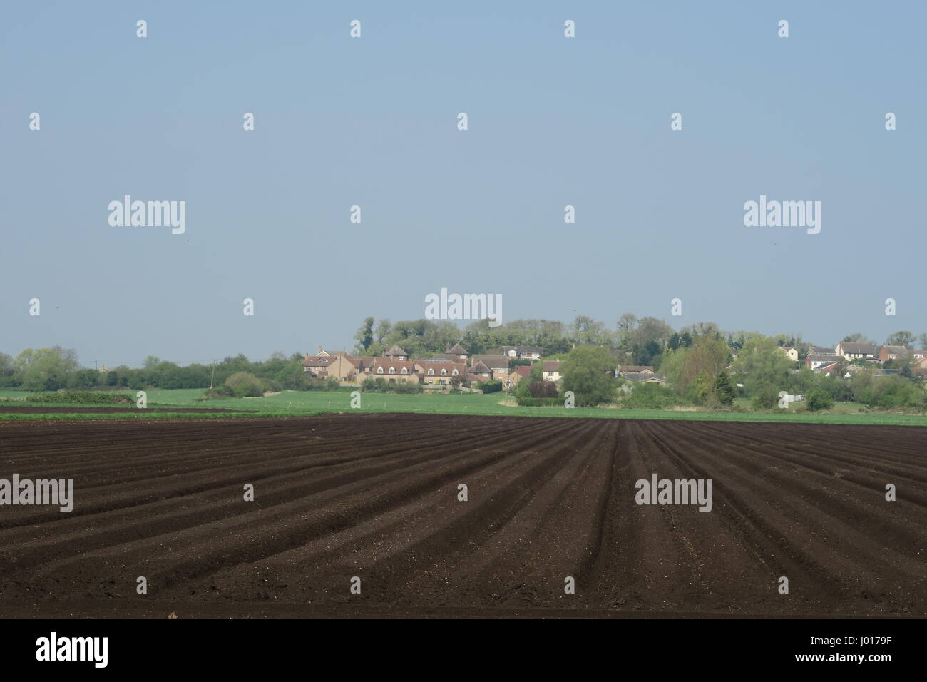 Newly ploughed fields on South Fen with the village of Sutton-in-the-Isle in the background Stock Photo