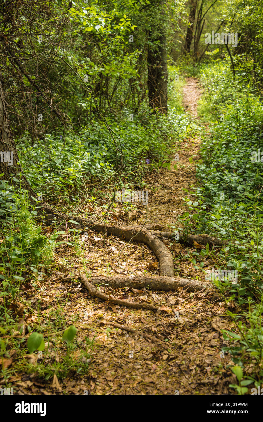 A wooded path in Muskogee, Oklahoma. (USA) Stock Photo