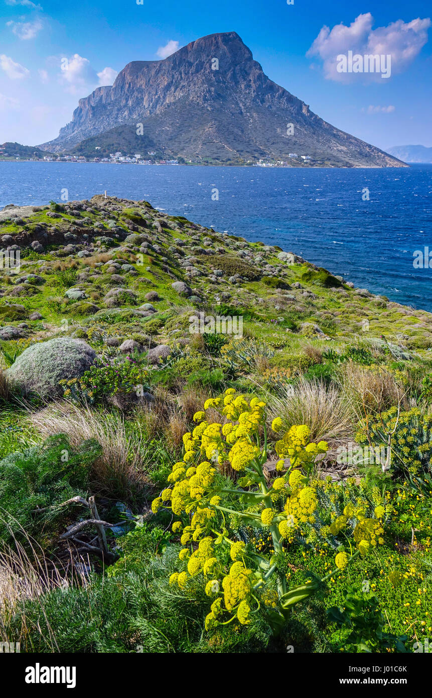 Telendos Island seen from Kalymnos with Giant Fennel in the foregound - Stock Image