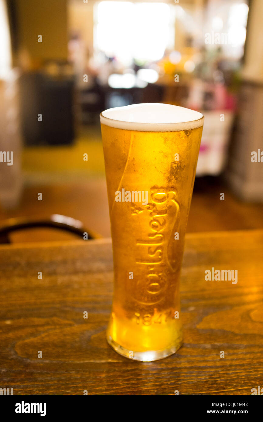 Close up of a pint of Carlsberg lager in a pub UK - Stock Image