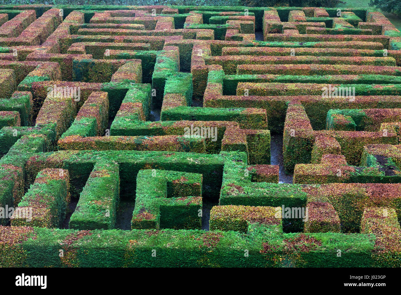 The maze at Traquair House, Scottish Borders, UK - Stock Image