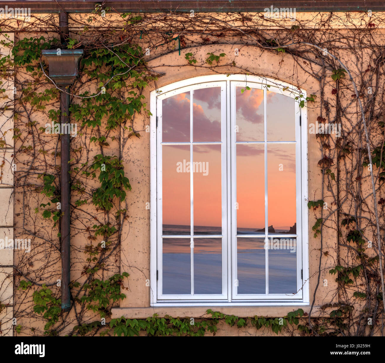 Ivy vine grows along a house and frames a bay window at sunset near ...