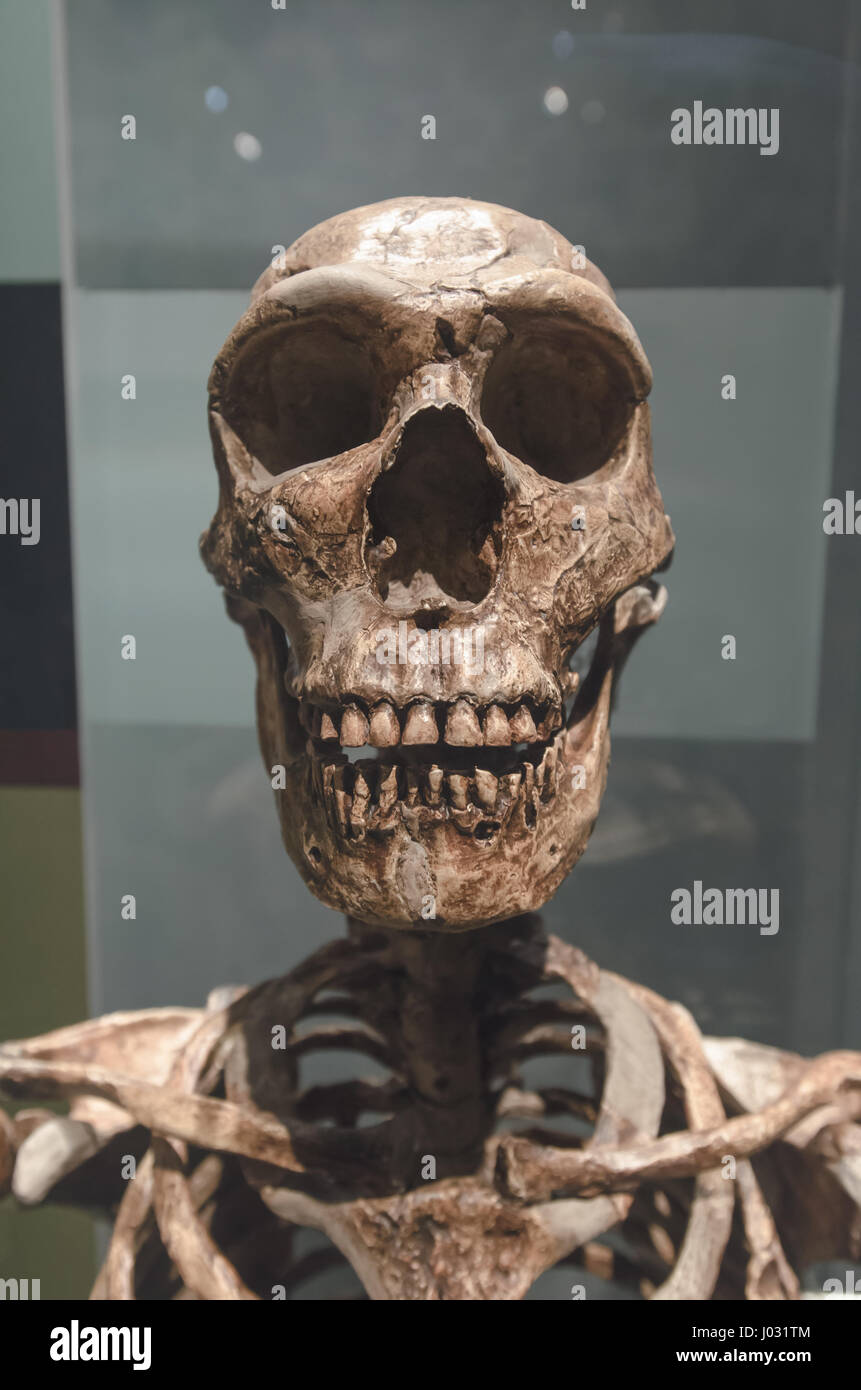 Neanderthal were a species of archaic humans in the genus Homo that went extinct about 40,000 years ago. - Stock Image