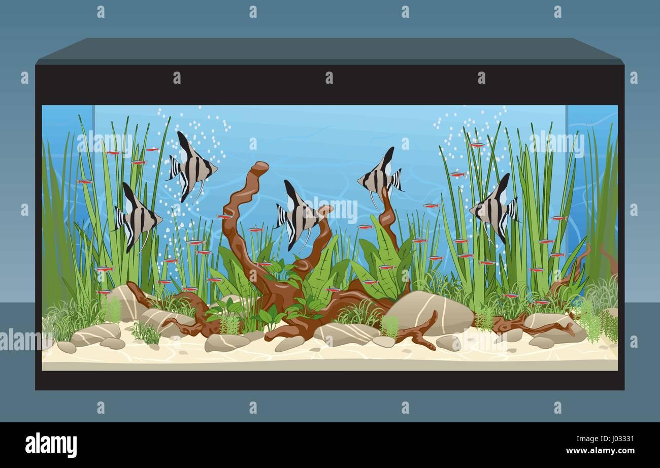 Natural Home Aquarium With Fish And Plants. Aquascape Tank. Vector  Illustration