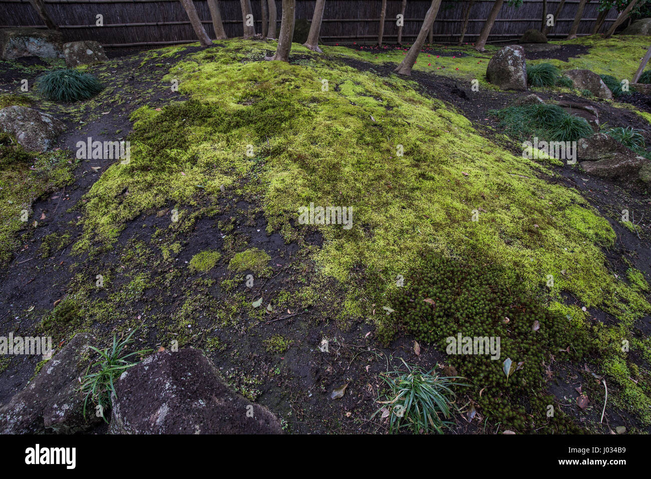 Moss and Stoneso at Five Peony Garden at Tsurugaoka Hachimangu Shrine - The garden was created in 1980 to commemorate - Stock Image