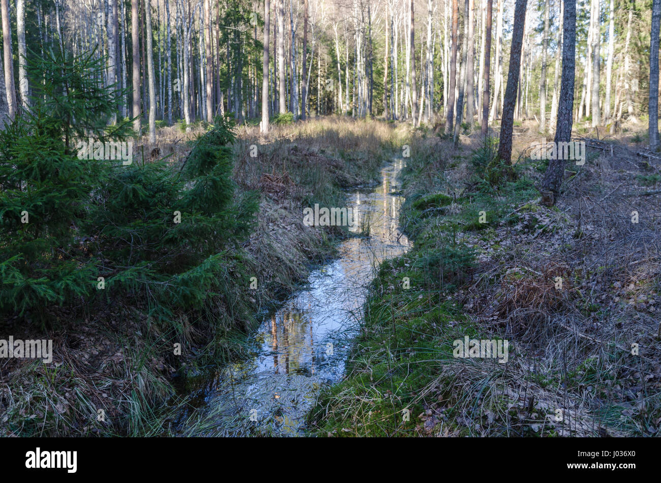 Draining by an open ditch in a forest - Stock Image