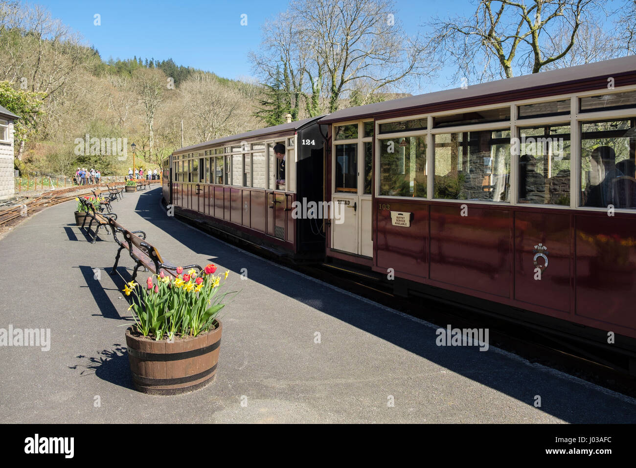 Train leaving platform in station on heritage narrow-gauge Ffestiniog Railway line at Tan-y-Bwlch, Gwynedd, North - Stock Image