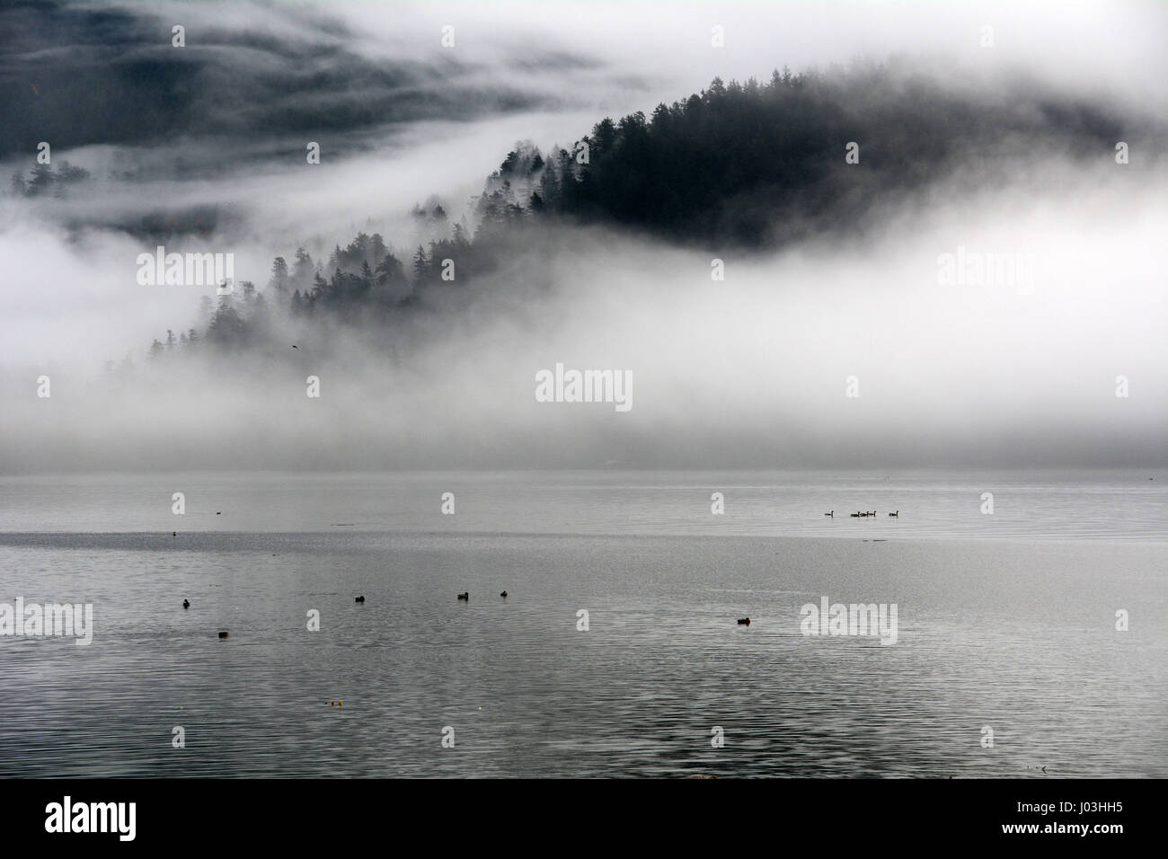 A forested mountainside is cloaked in morning mist beside the Harrison River near the town of Harrison Mills, British - Stock Image
