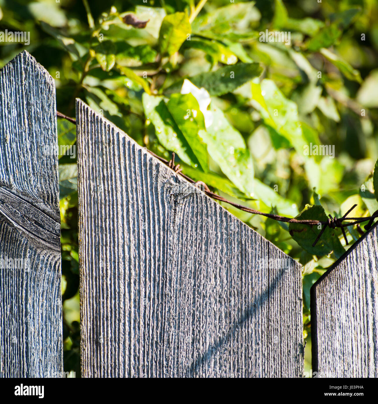 Old Wooden Fence Barbed Wire Stock Photos & Old Wooden Fence Barbed ...