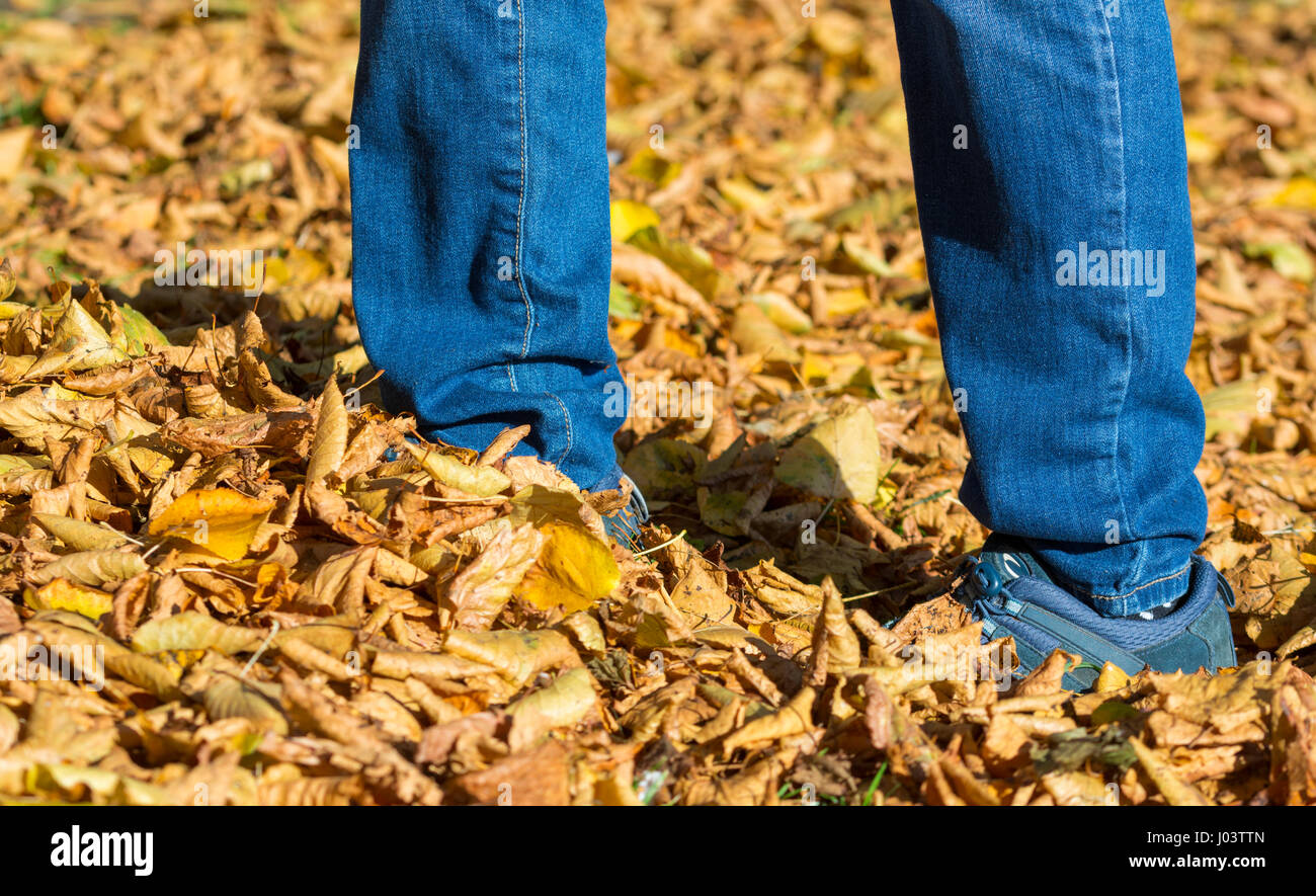 Autumn concept. Person walking in leaves on the ground in Autumn colours in the UK. - Stock Image