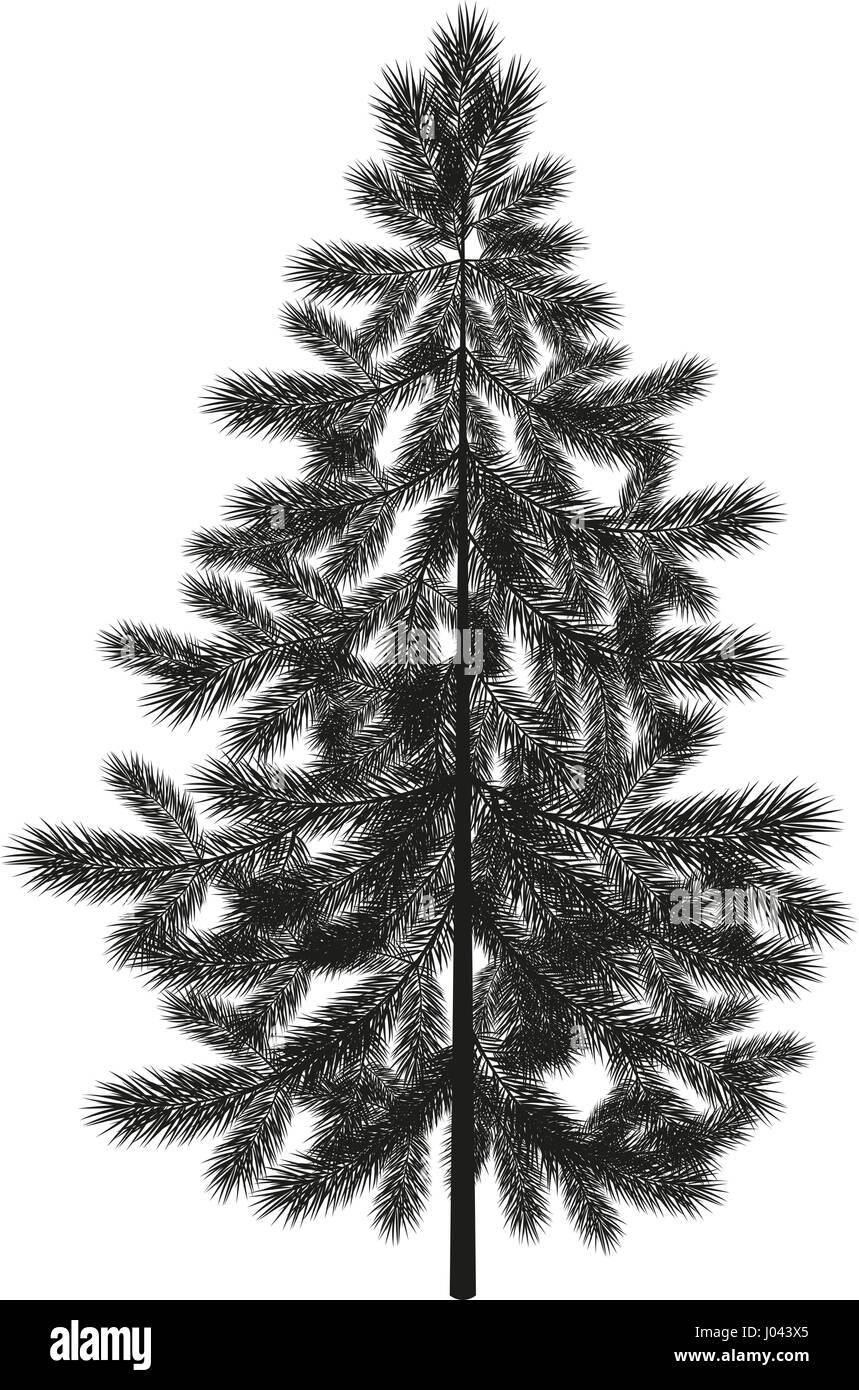 Christmas spruce fir tree silhouette - Stock Vector