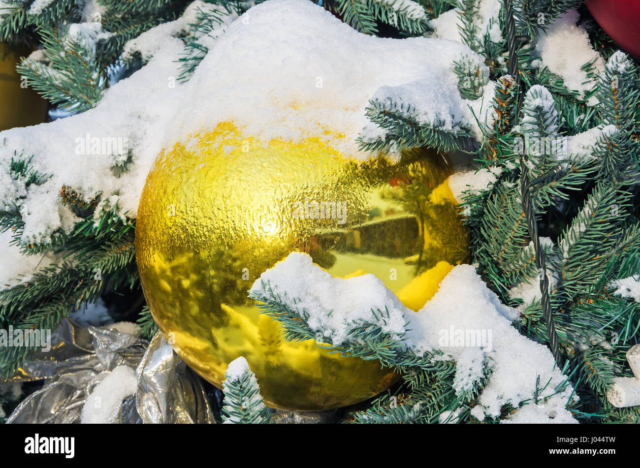 Spangled cold snow young spruce Christmas decorations in city park - Stock Image