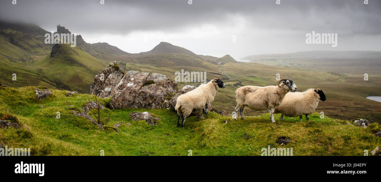 Three sheep look out upon the fairytale landscape of the Quiraing, a mountain landslip on the Trotternish Peninsula - Stock Image