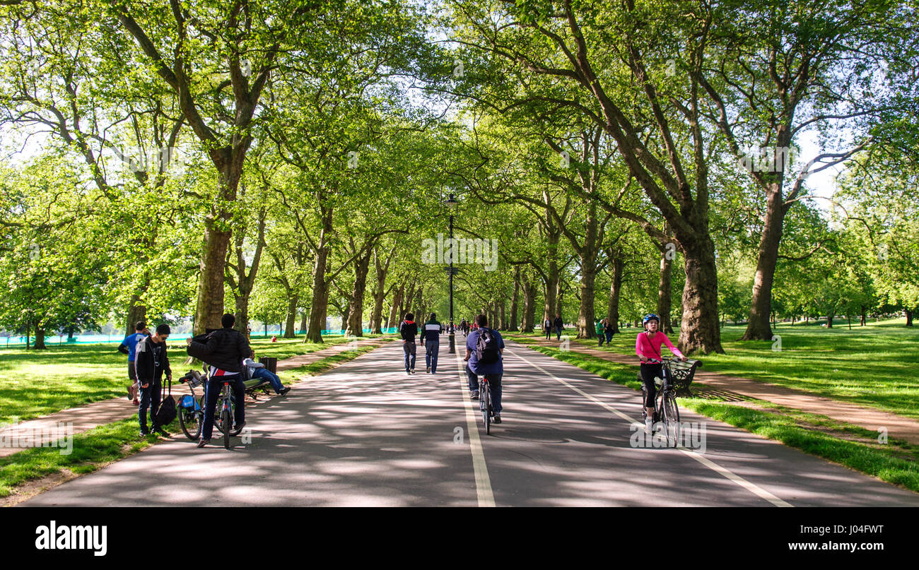 Commuters and tourists ride bicycles, including 'Boris Bike' hire bikes under the avenue of trees on the - Stock Image