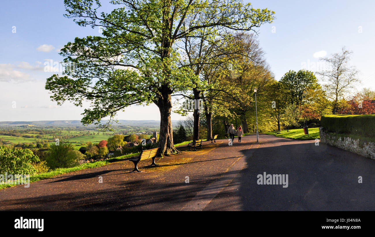 The hilltop avenue of trees on Park Walk in Shaftesbury, Dorset. - Stock Image