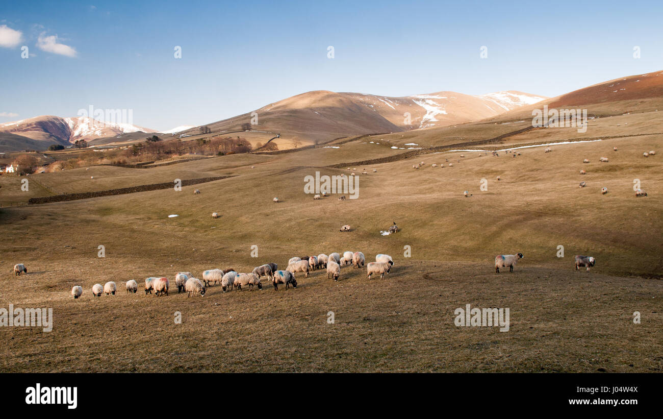 The round and folded worn mountains of the Howgill Fells on the edge of the Yorkshire Dales National Park in Cumbria, - Stock Image