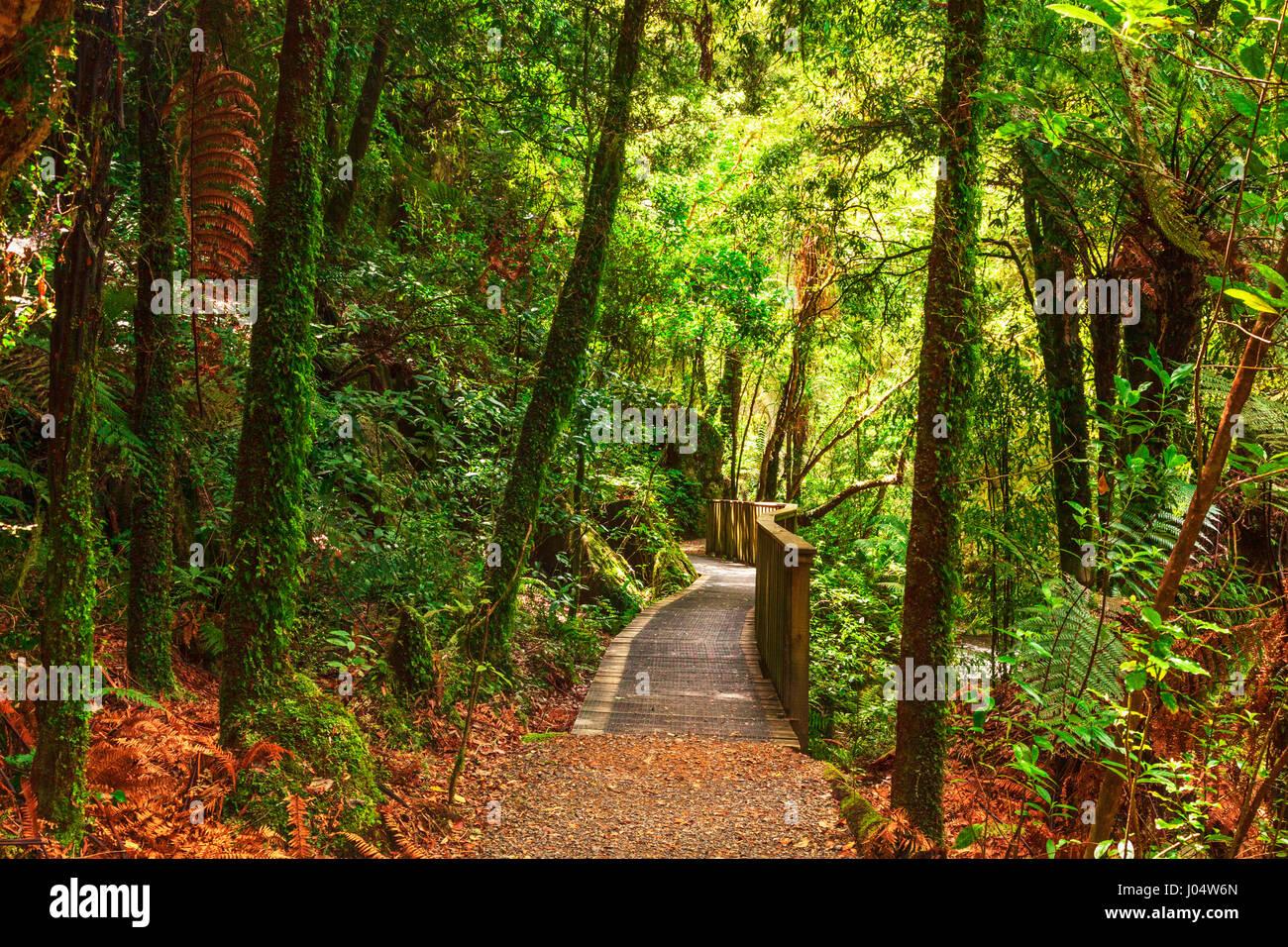 Pathway through New Zealand native bush, Mangapohue Natural Bridge, Waitomo District, Waikato, New Zealand. - Stock Image