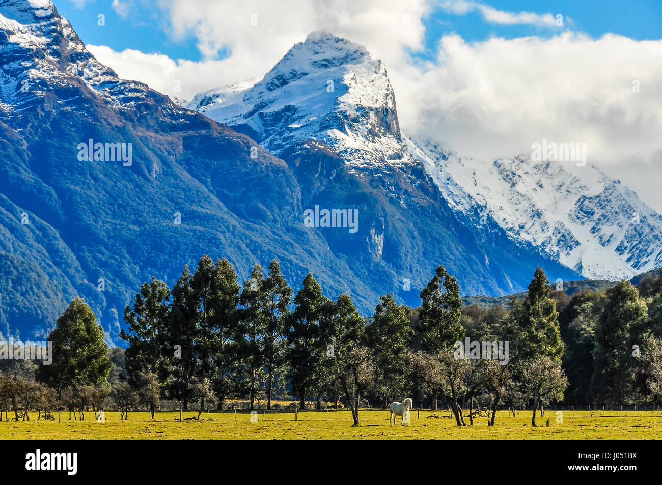 White horse in front of snowy peaks in Lord of the Rings film location, Glenorchy, New Zealand - Stock Image