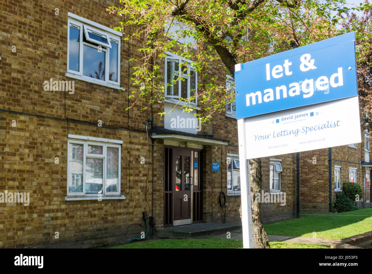 Let & Managed estate agency sign on houses. - Stock Image