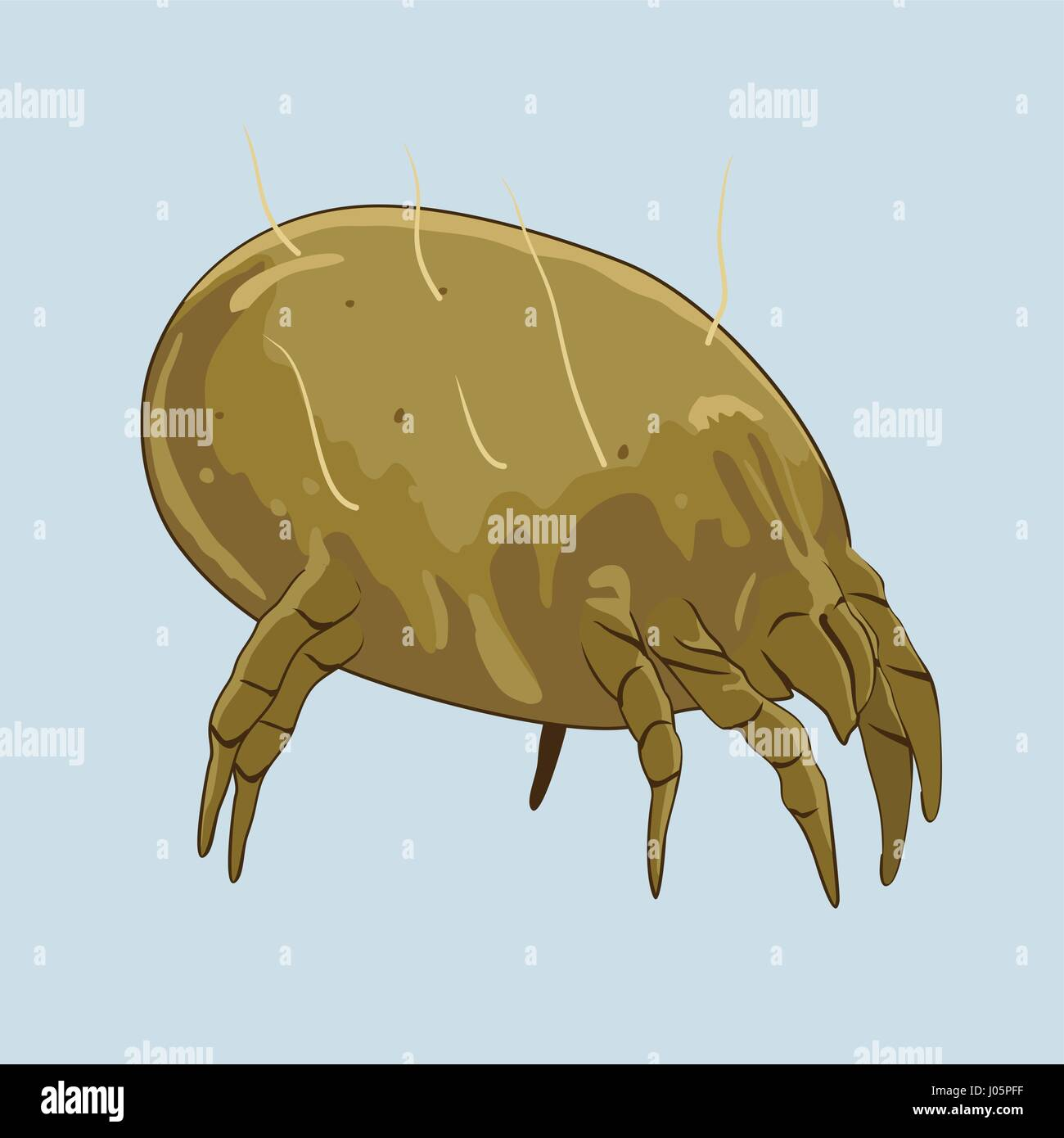 House dust mite. Microscopic bugs cause of allergies. Vector illustration Stock Vector