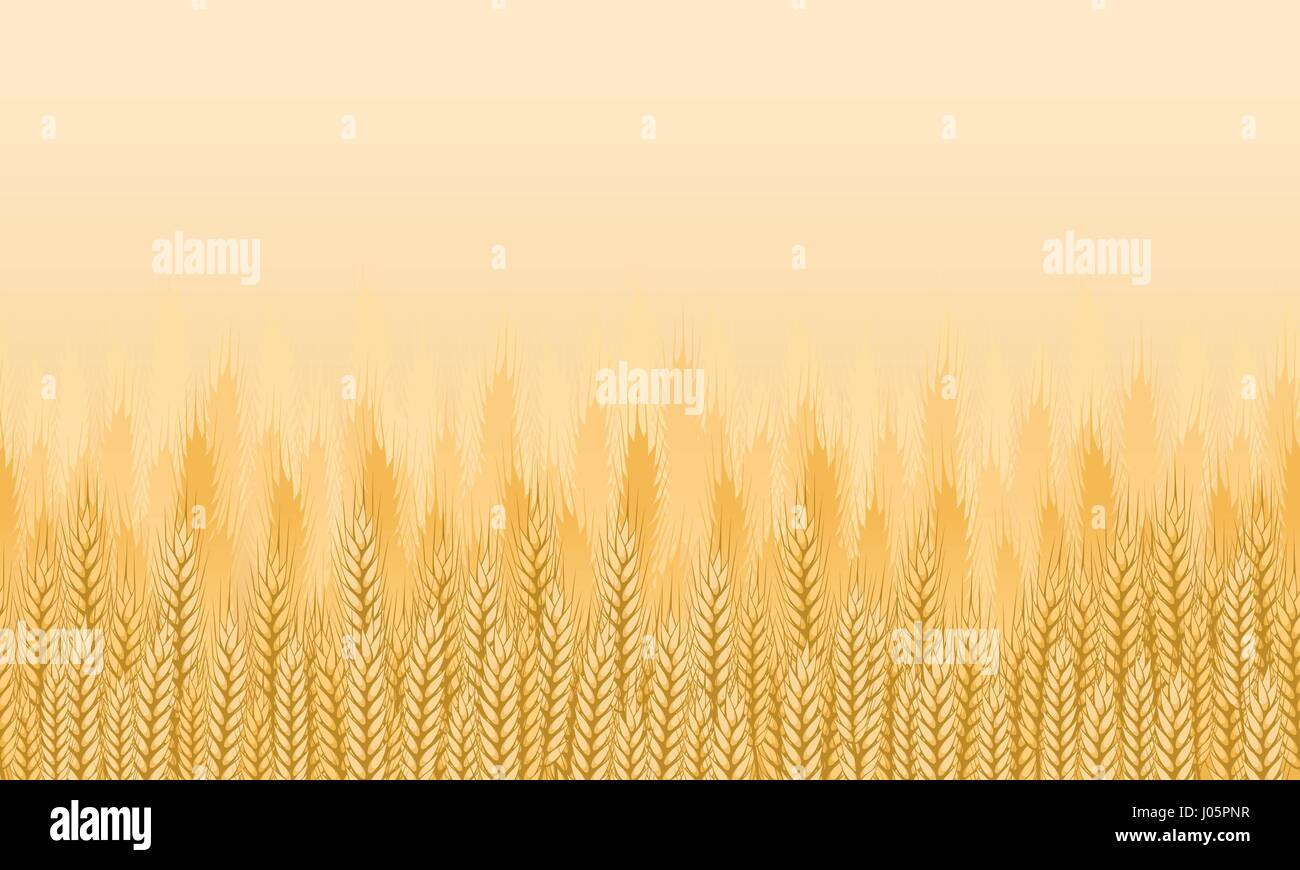 Wheat field background. Agricultural landscape seamless background. Vector illustration - Stock Vector