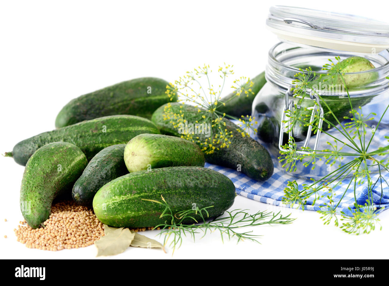 canning cucumber in a jar with spices like dill - Stock Image