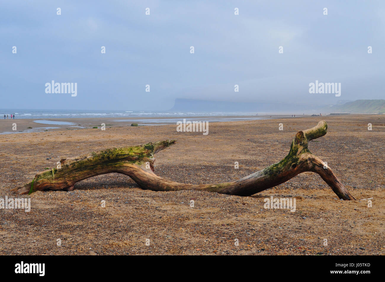 Driftwood at the beach Marske-by-the-Sea, Yorkshire, UK - Stock Image