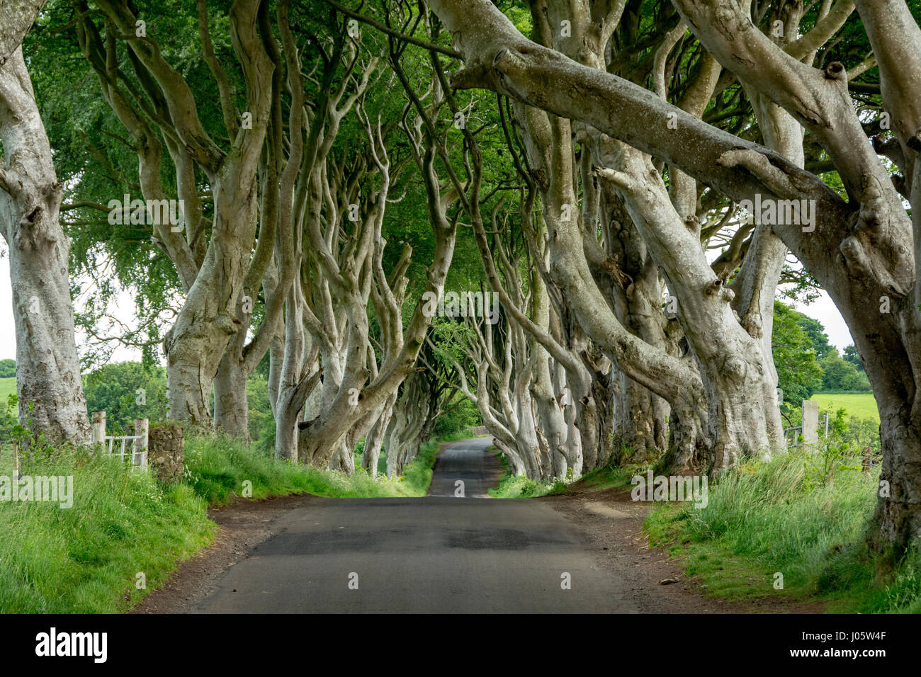 The Dark Hedges, near Armoy, County Antrim, Northern Ireland, UK Stock Photo