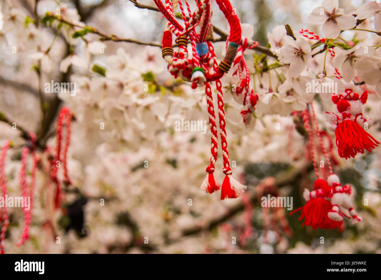 Red oriental ornamentals on a blooming cherry tree. bulgarian style. - Stock Image