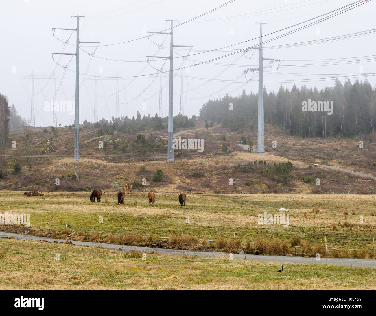 Horses in field with overhead electricity grid power lines  Model Release: No.  Property Release: No. - Stock Image