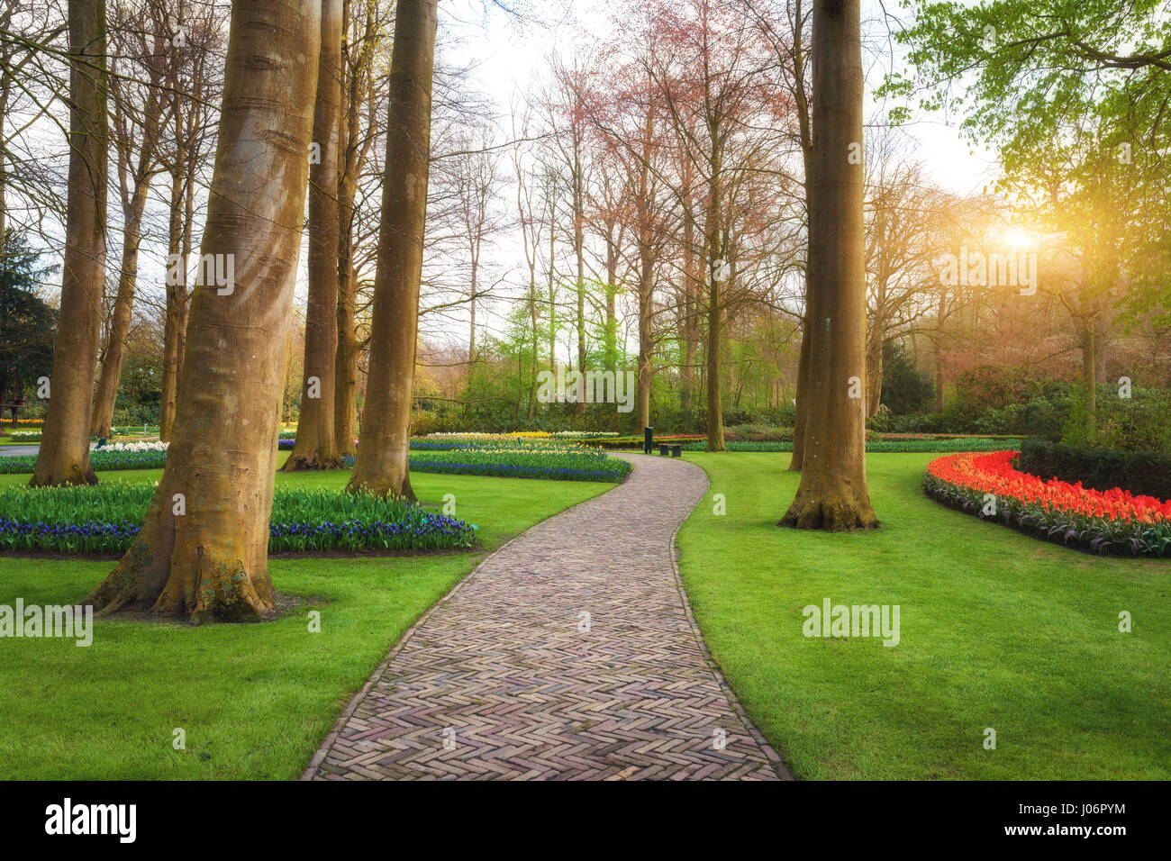 Walkway through the Keukenhof park in Netherlands at sunset. Landscape with blooming spring garden. Beautiful scene - Stock Image