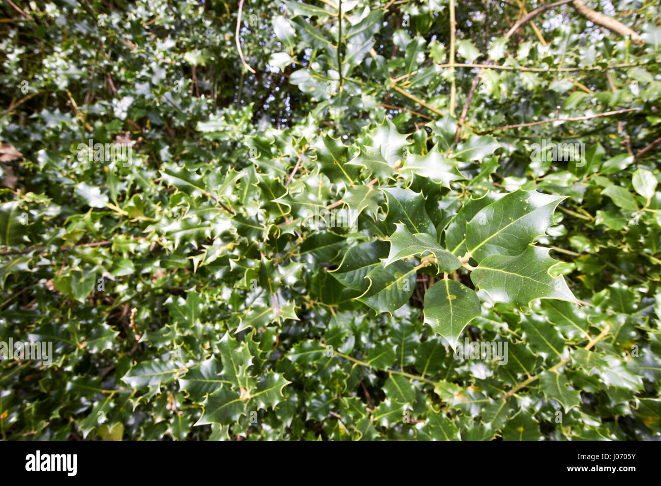 Plants With Spiky Leaves Stock Photos Plants With Spiky Leaves