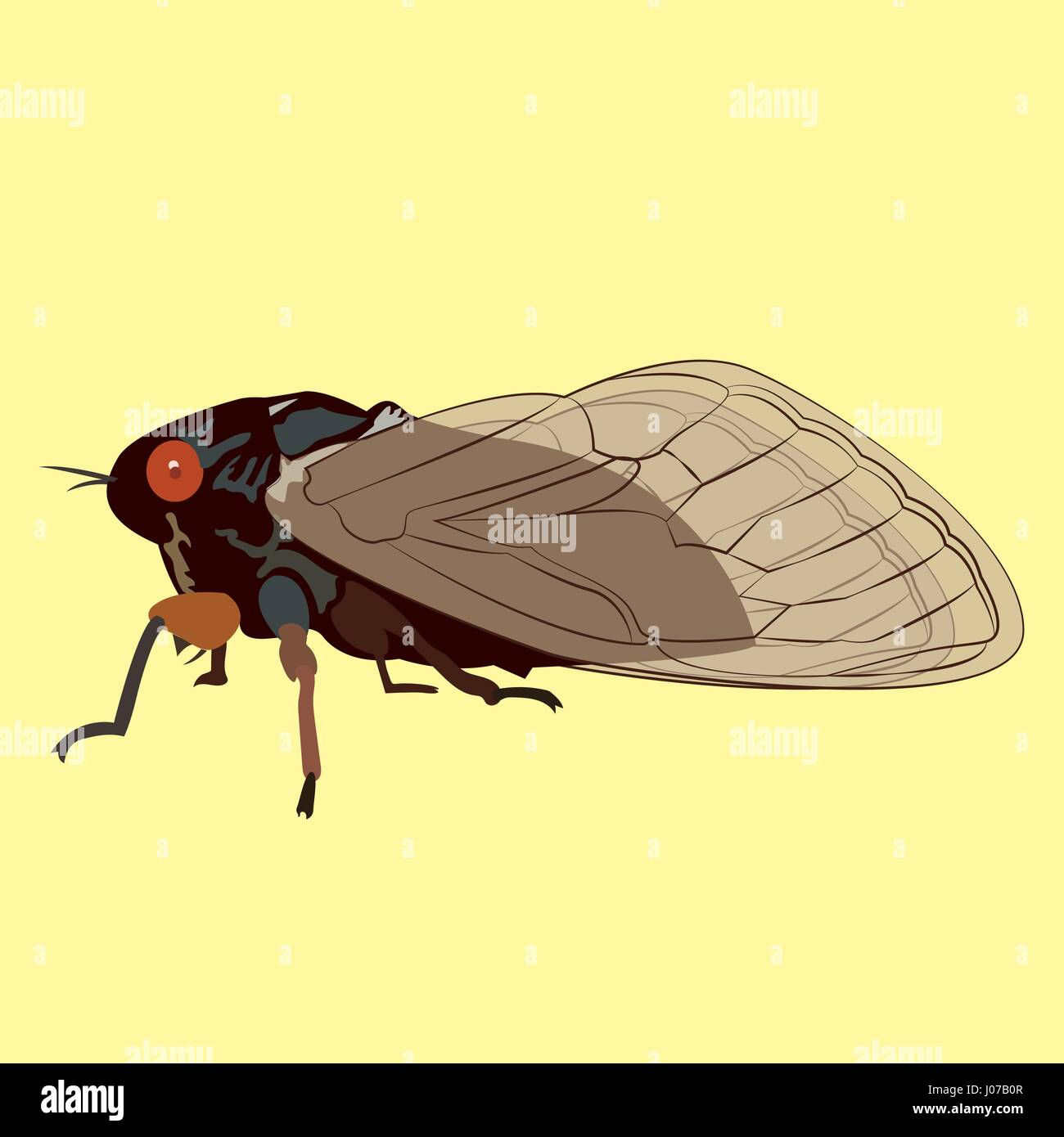 Vector Image of 17 Year Cicada that only Appears Every Seventeen years.  These Insects Hibernate for 17 Years - Stock Vector