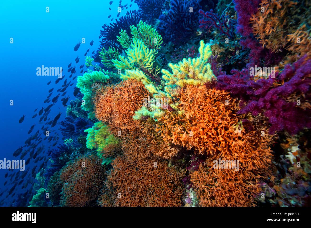 coral reef from lastovo, Croatia - Stock Image