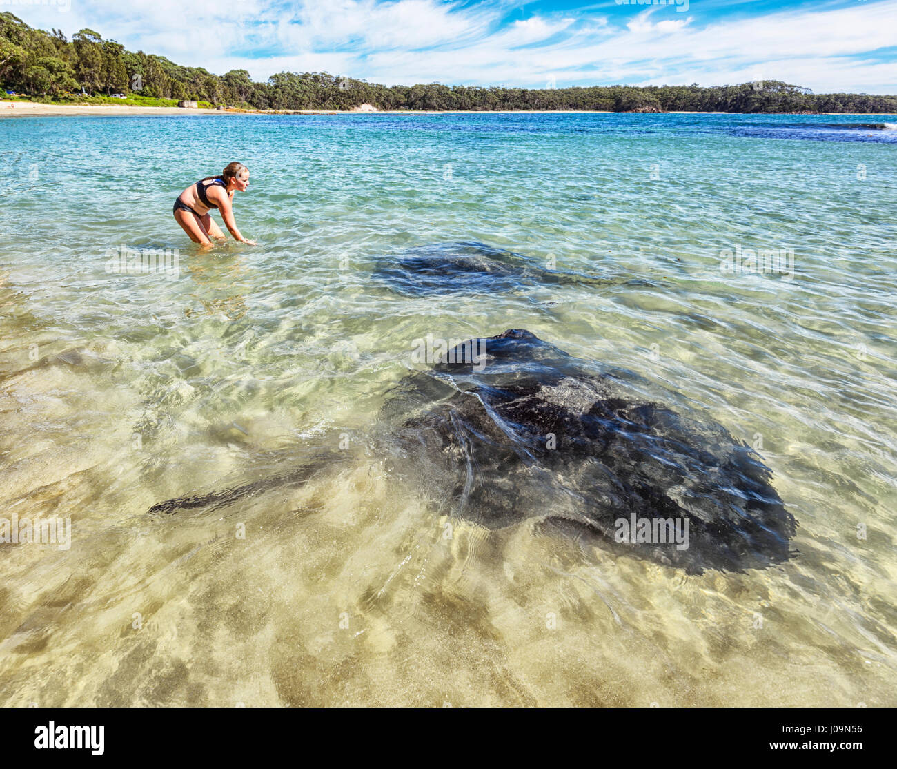 Young girl feeding giant stingrays at Washerwoman's Beach, Bendalong Beach, Shoalhaven, South Coast, New South - Stock Image