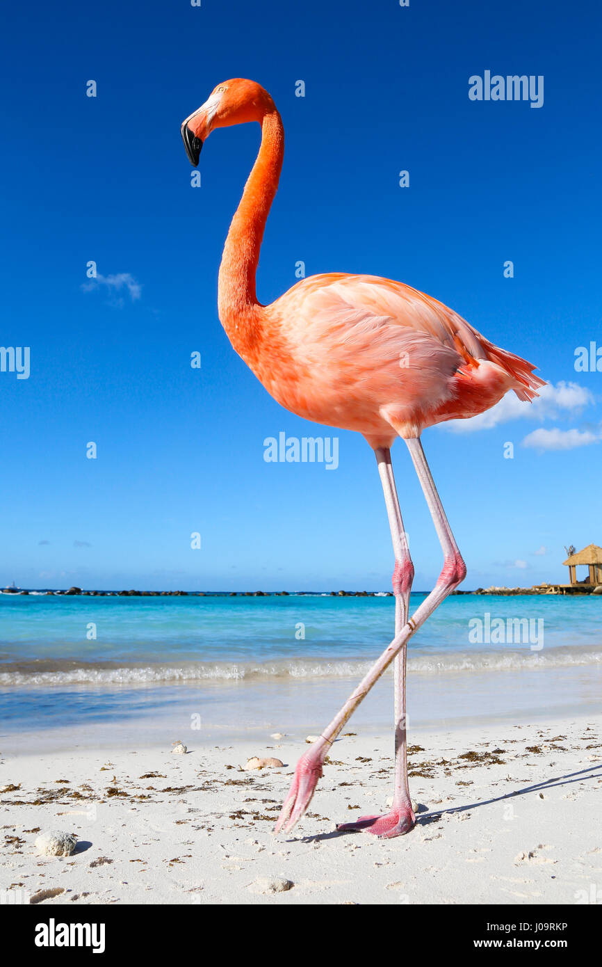 Benedenwindse Stock Photos & Benedenwindse Stock Images - Alamy