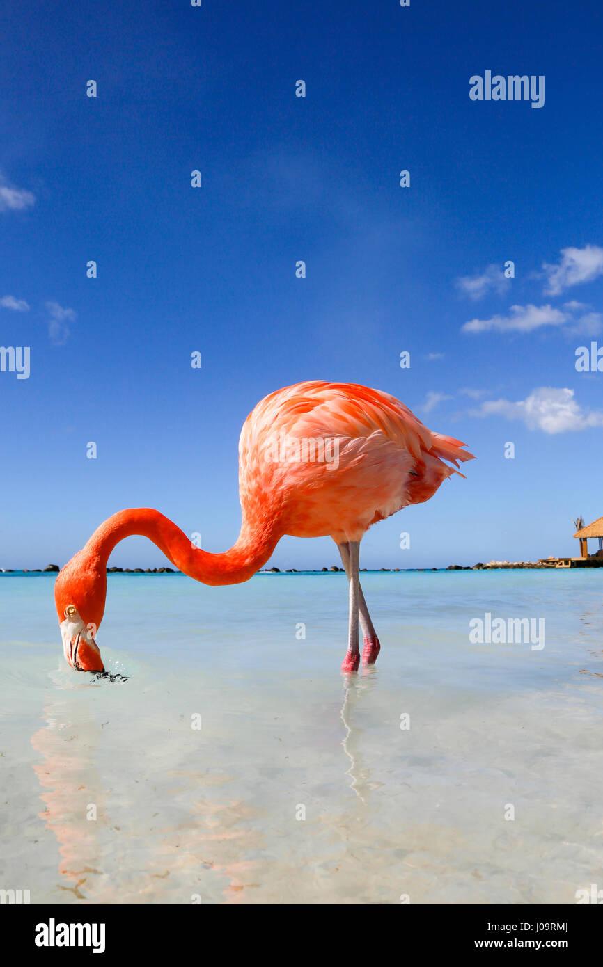 The best beaches of Aruba: Flamingo Beach of the Renaissance Hotel Stock Photo