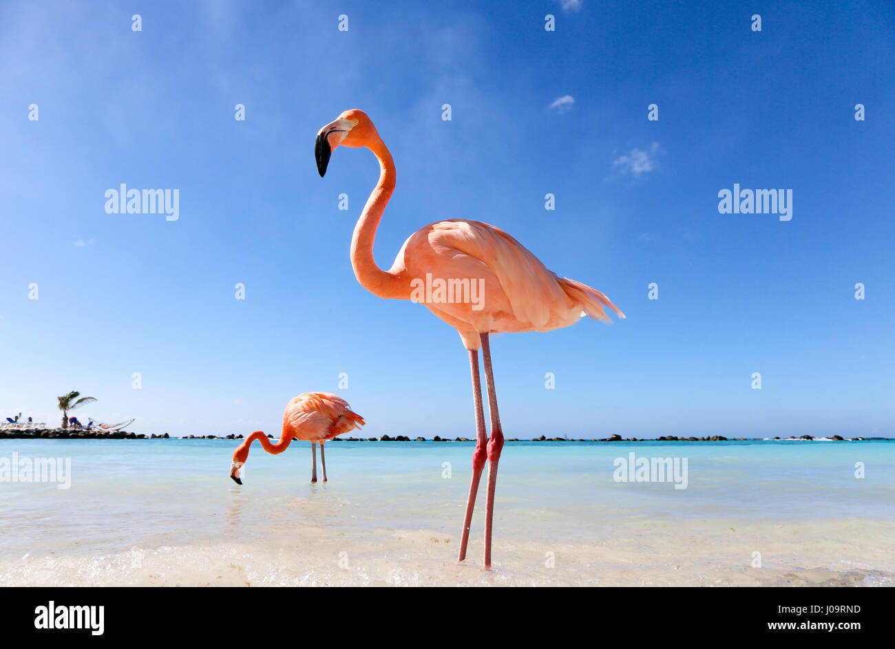 Benedenwindse Stock Photos & Benedenwindse Stock Images - Alamy