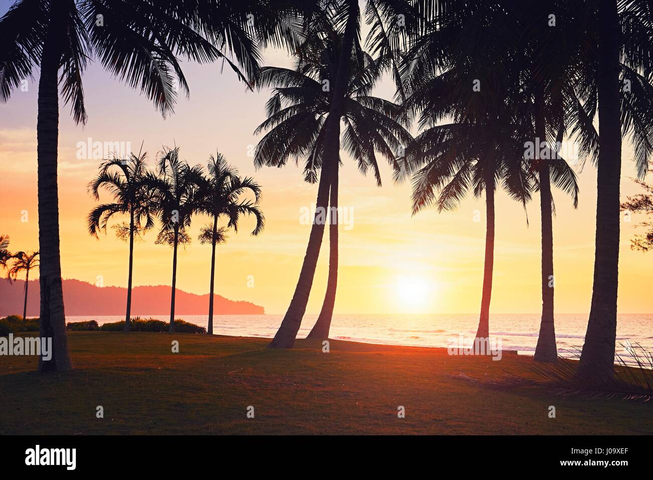 Silhouette of the palm trees on the beach at the amazing sunset. Summer vacation and  travel concept. Island of - Stock Image