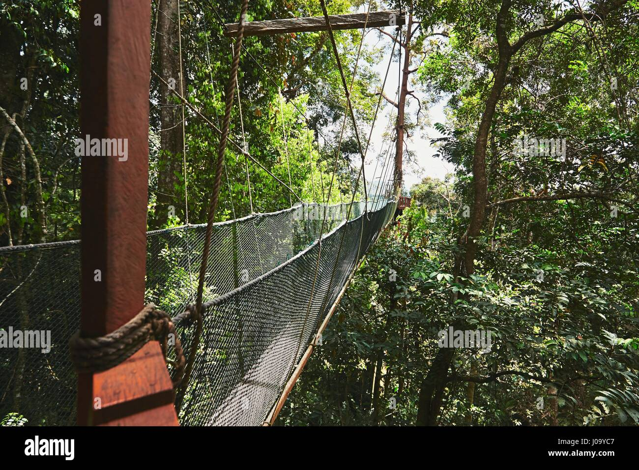Long elevated walkway through the treetops in rainforest - Borneo, Malaysia Stock Photo