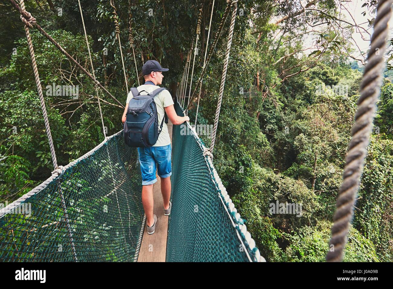 Tourist on the elevated walkway through the treetops in rainforest - Borneo, Malaysia - Stock Image