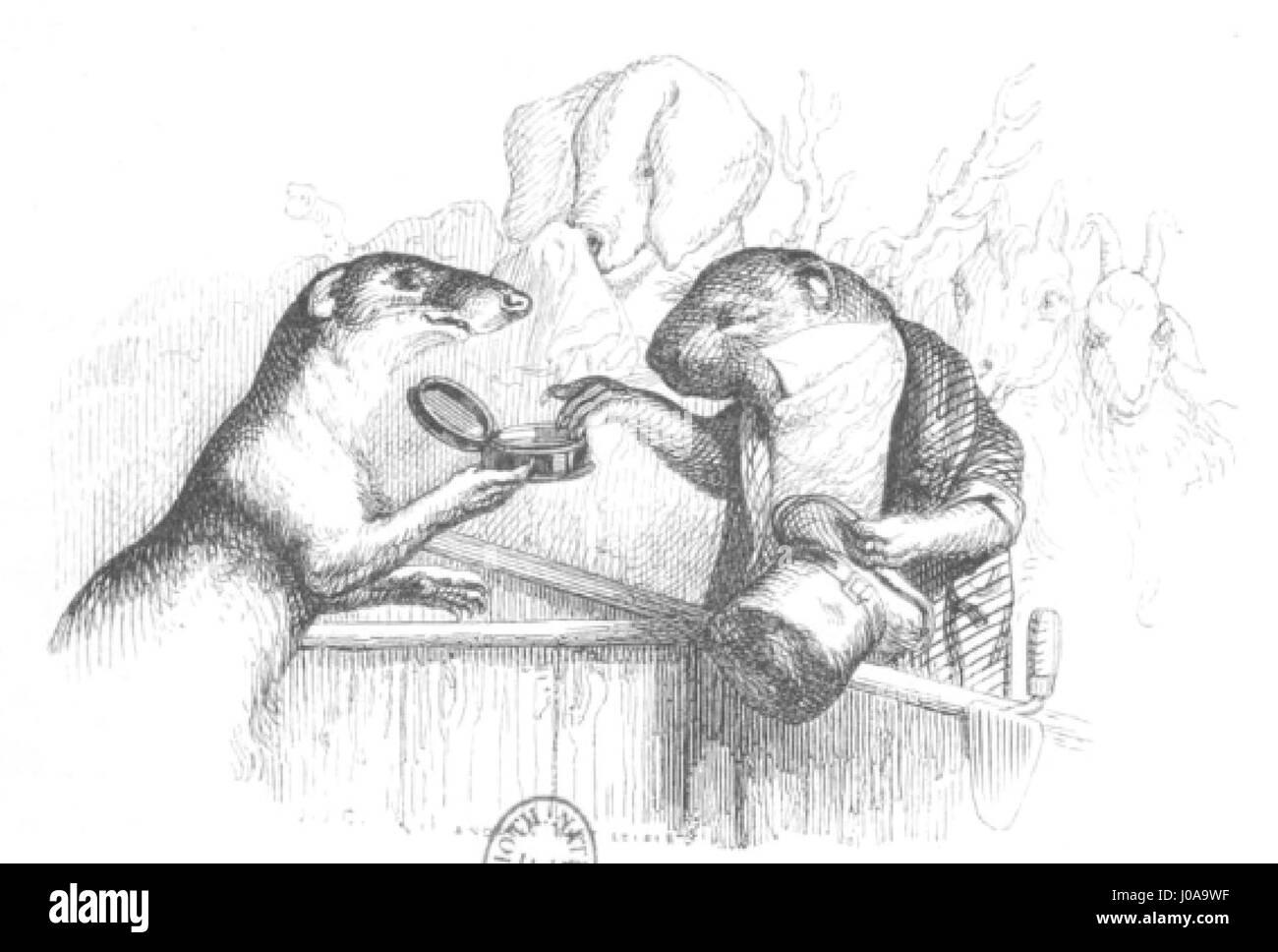 Scènes de la vie privée et publique des animaux, tome 1 0055 - Stock Image