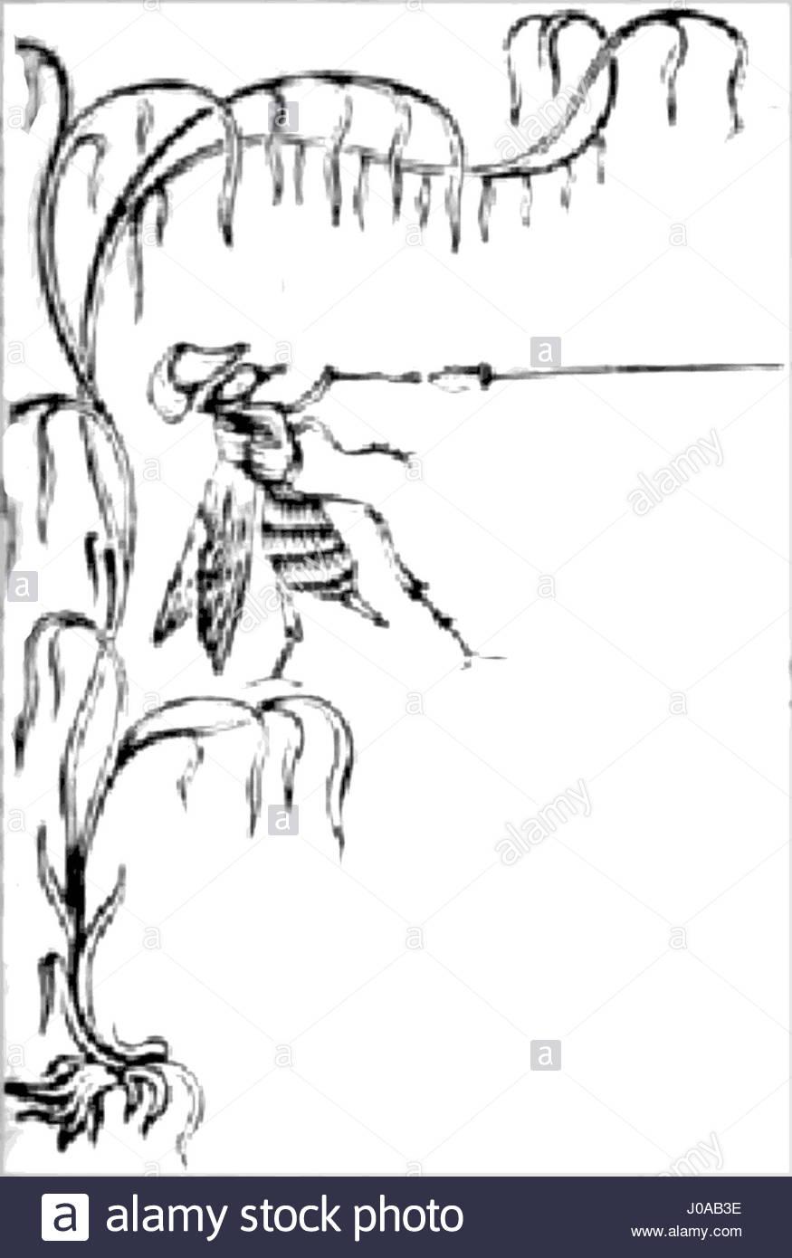 Scènes de la vie privée et publique des animaux, tome 1 0021-hg - Stock Image